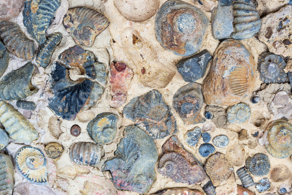 Rocha garfo Colômbia mar oceano pedra Foto stock © jkraft5