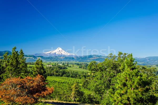 Mt. Hood and Valley Stock photo © jkraft5