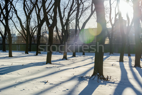 śniegu drzewo drzew długo parku Zdjęcia stock © jkraft5
