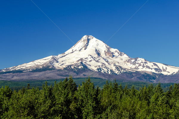 Majestic Mt. Hood Stock photo © jkraft5