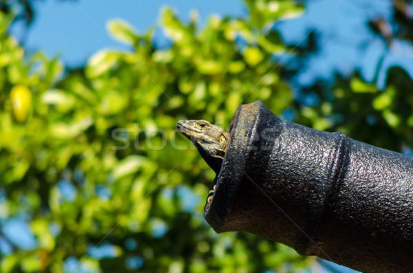 Hagedis kanon groot binnenkant oog natuur Stockfoto © jkraft5