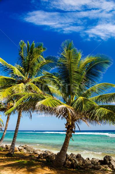 Palm turkus wody widoku wybrzeża Kolumbia Zdjęcia stock © jkraft5