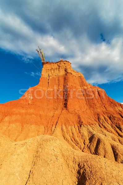Kaktus czerwony kolumnie posiedzenia pustyni niebo Zdjęcia stock © jkraft5
