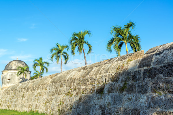 Wall and Palm Trees Stock photo © jkraft5