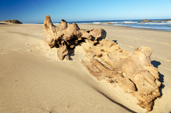 Grande troncos peça praia cidade Oregon Foto stock © jkraft5
