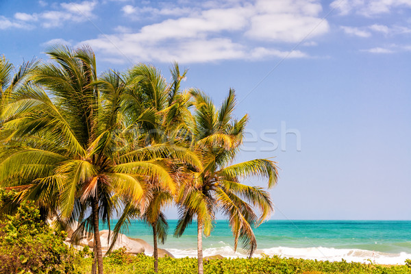 Three Palm Trees and Caribbean Stock photo © jkraft5