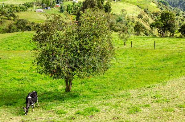 Inek ağaç gökyüzü orman Stok fotoğraf © jkraft5