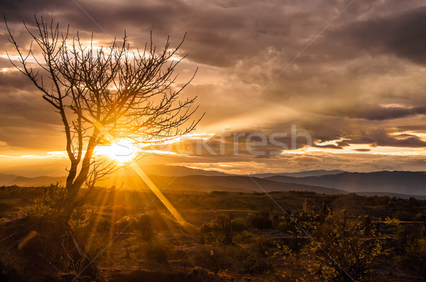 Spectacular Desert Sunrise Stock photo © jkraft5