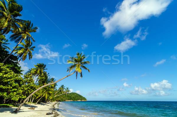 美しい ビーチ 白砂 カリビアン 海 ストックフォト © jkraft5