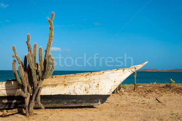 Cactus on a Beach Stock photo © jkraft5
