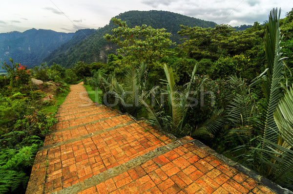 Cloud Forest Path Stock photo © jkraft5