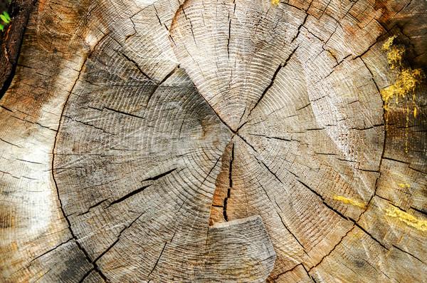 árvore seção transversal textura pinheiro madeira abstrato Foto stock © jkraft5