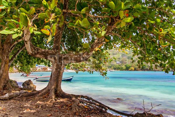 Drzewo morza widoku Karaibów lasu charakter Zdjęcia stock © jkraft5