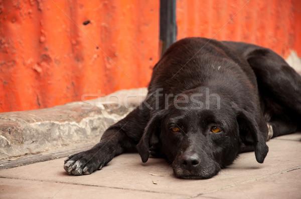 Dog Laying on Sidewalk Thinking Stock photo © jkraft5