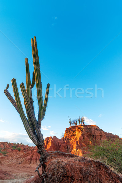 Cactus in a Red Desert Valley Stock photo © jkraft5