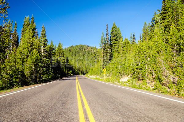 Forested Highway Stock photo © jkraft5