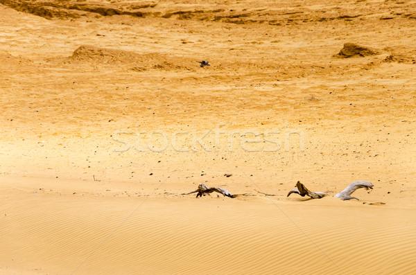 Dry Desert Sands Stock photo © jkraft5