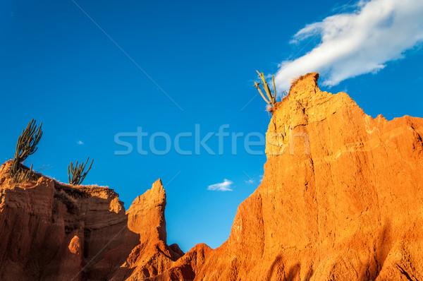 Cactus on Rocky Outcrop Stock photo © jkraft5