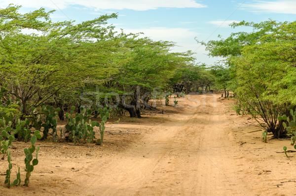 Sivatag földút régió LA tájkép zöld Stock fotó © jkraft5