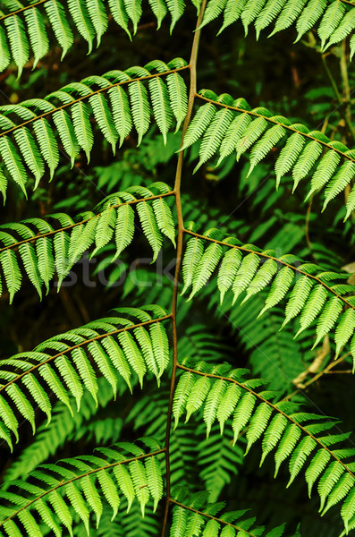 Fern Leaf Stock photo © jkraft5