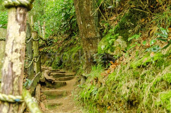 Orman iz yol tırabzan doğa ağaçlar Stok fotoğraf © jkraft5