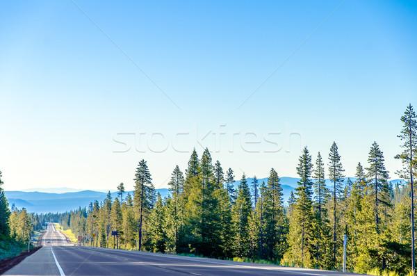 Uzun karayolu orman manzaralı bereketli yeşil Stok fotoğraf © jkraft5