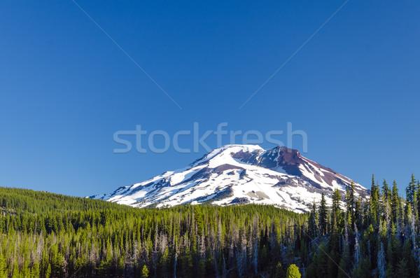Południe siostra widoku lasu jeden trzy Zdjęcia stock © jkraft5