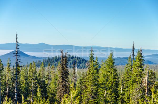 Forest Landscape Stock photo © jkraft5