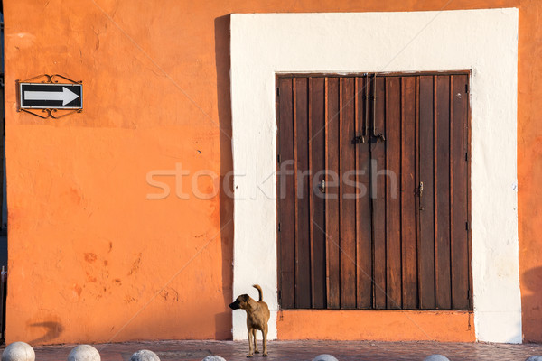 Köpek sömürge Bina ayakta Stok fotoğraf © jkraft5