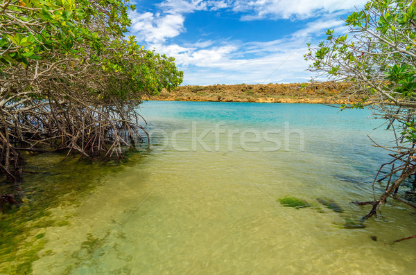 Sea and Mangrove View Stock photo © jkraft5