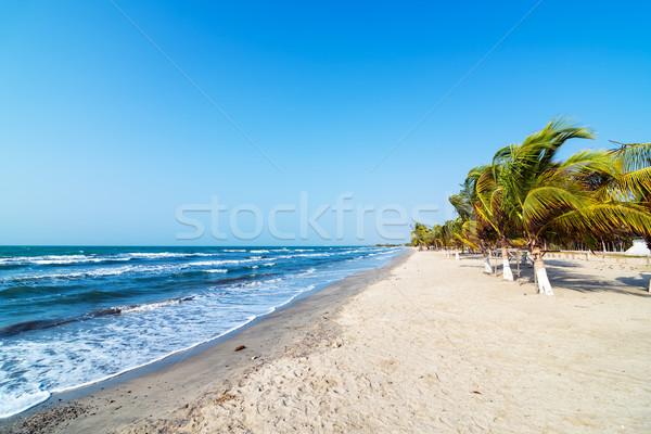 Beach and Palm Trees Stock photo © jkraft5