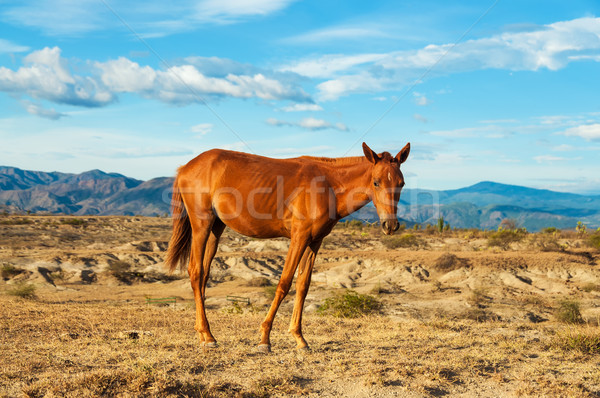 Young Horse in a Desert Stock photo © jkraft5