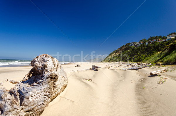 Praia troncos cidade luxuriante verde penhasco Foto stock © jkraft5