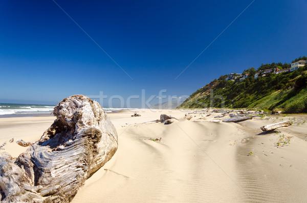 Beach Driftwood Stock photo © jkraft5