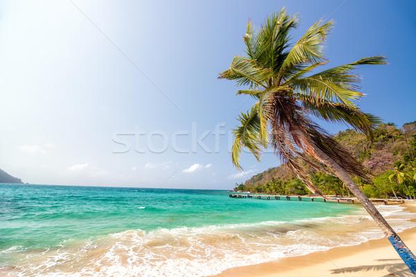 ビーチ ヤシの木 白砂 美しい ラ パナマ ストックフォト © jkraft5