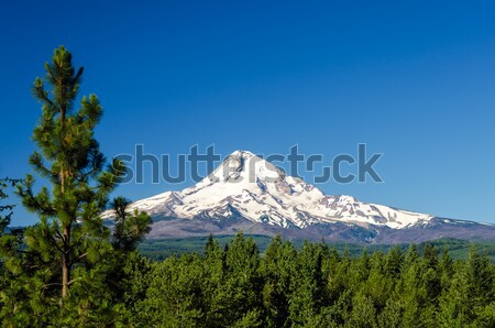 Mt. Hood and Pine Trees Stock photo © jkraft5