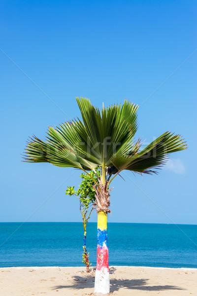 Small Palm Tree Stock photo © jkraft5