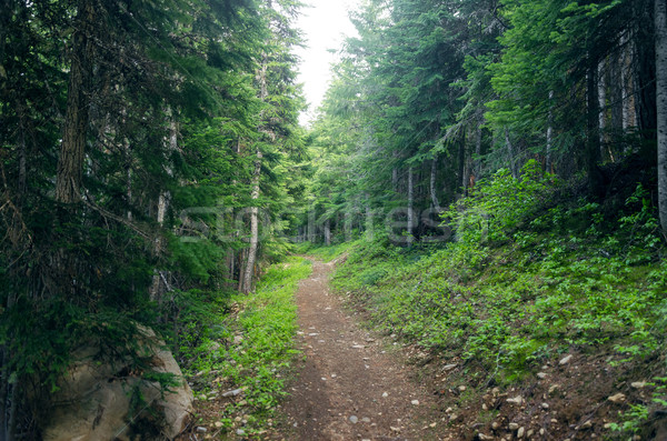 Evergreen forêt chemin courir Oregon nature Photo stock © jkraft5