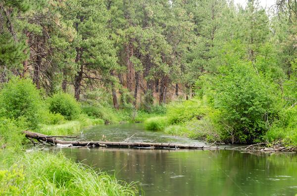 Peaceful Deschutes River Stock photo © jkraft5