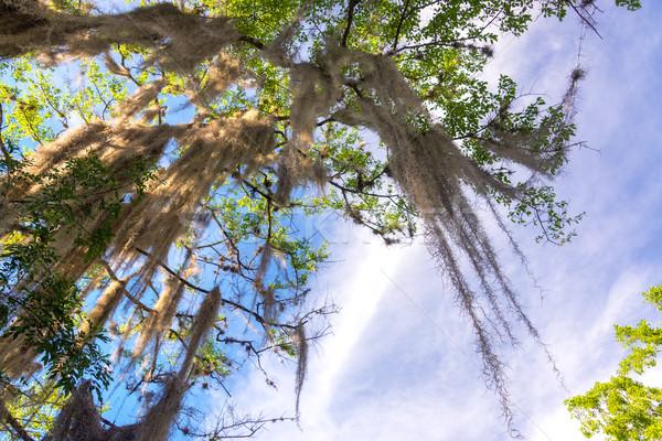 Spaans mos boom stad hemel bos Stockfoto © jkraft5