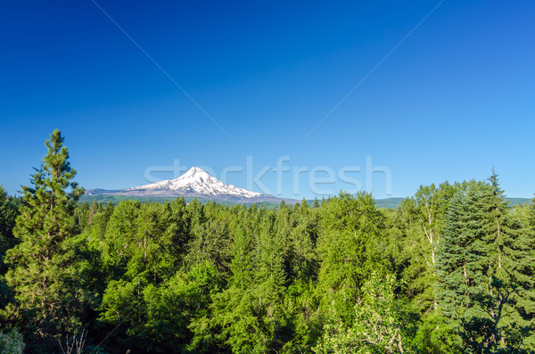 Forest and Mt. Hood Stock photo © jkraft5