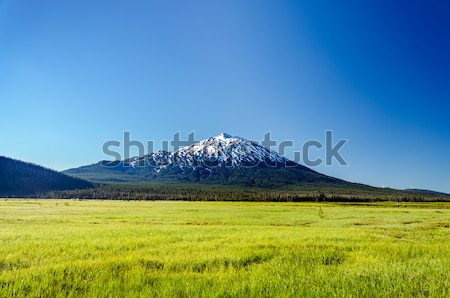 Lush Green Meadow and Mount Bachelor Stock photo © jkraft5