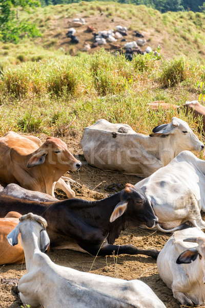 Group of Cows Stock photo © jkraft5