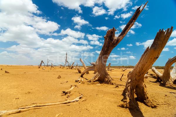 ölü ağaçlar çöl kuru Stok fotoğraf © jkraft5