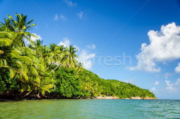 Weelderig groene kustlijn caribbean palmbomen water Stockfoto © jkraft5