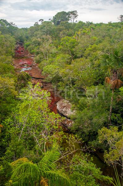 Colombia mooie kleuren landschap bomen Stockfoto © jkraft5