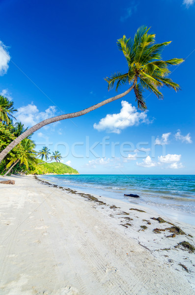 Deserted Beach and Palm Trees Stock photo © jkraft5