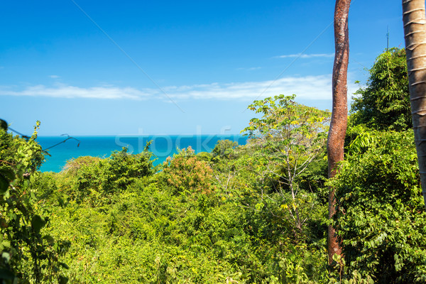 Lush Green Jungle Stock photo © jkraft5