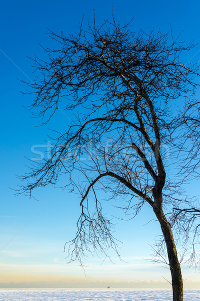 Dead Tree and Frozen Lake Stock photo © jkraft5