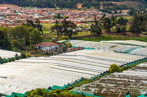 цветок растущий цветы промышленности производства Колумбия Сток-фото © jkraft5